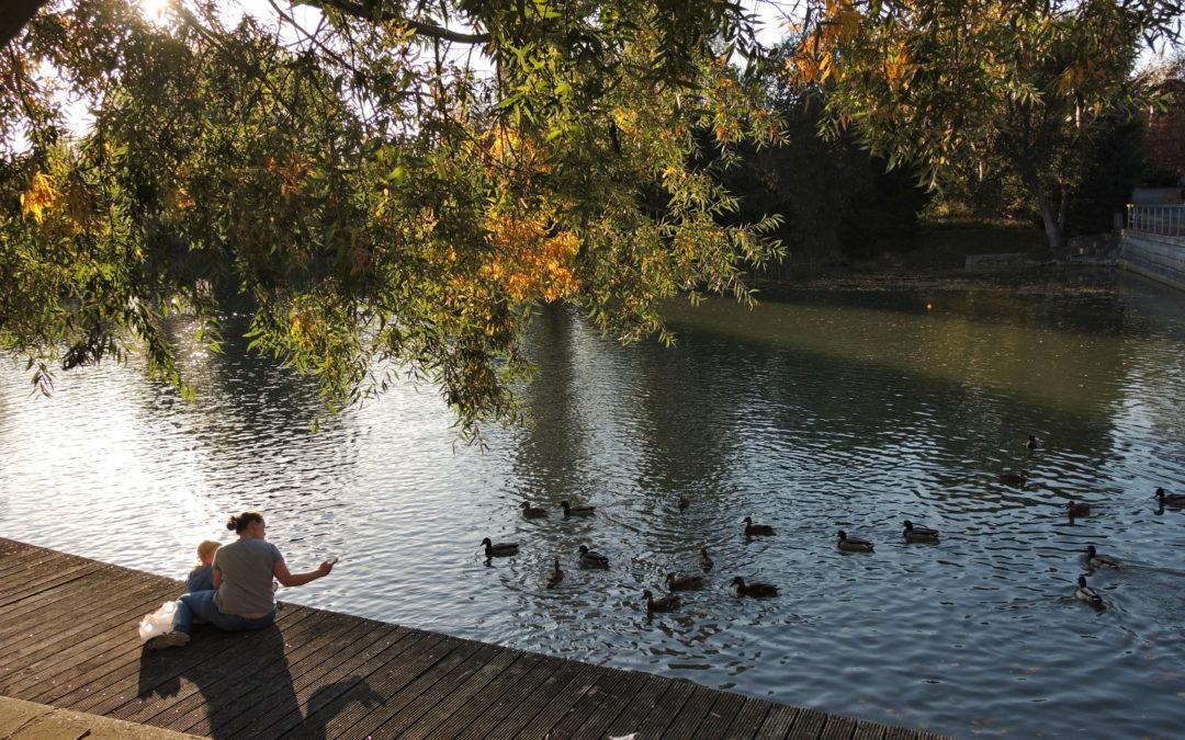 Braškovský rybník v ohrožení